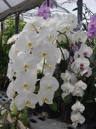 facile l entretien d une orchid e solutia services domicile le blog. Black Bedroom Furniture Sets. Home Design Ideas