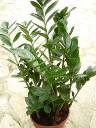 plantes c gralon.net